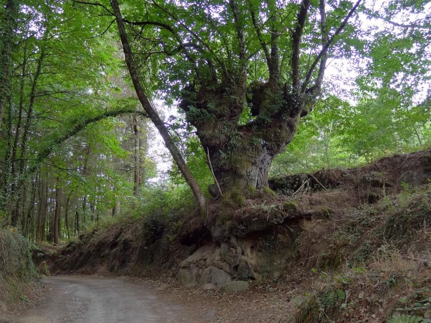 Weg hinter Castroverde
