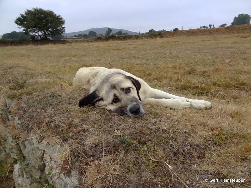 Müder Hund am Wegesrand