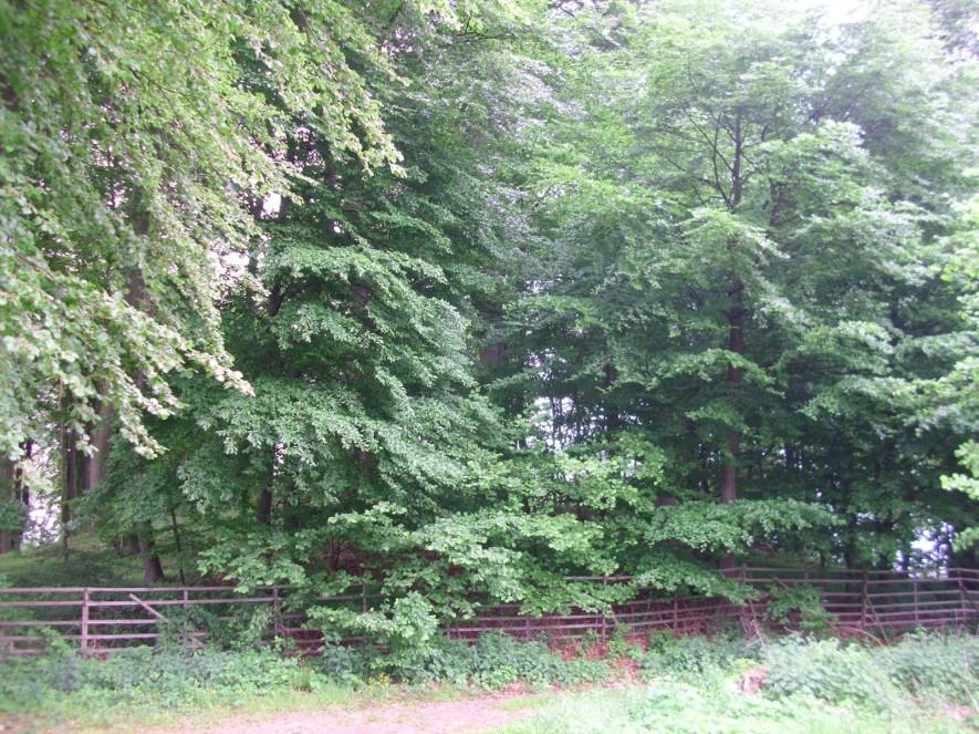 Bruder Tönnes Hügel bei Waldesch - ein Fürstengrab von 1000 bis 500 vor Christus