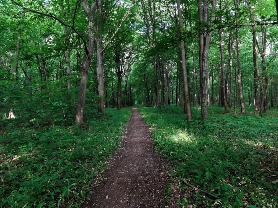 Auenwald hinter Horburg