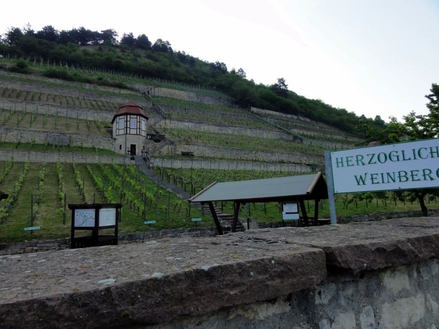 Herzöglicher Weinberg in Freyburg