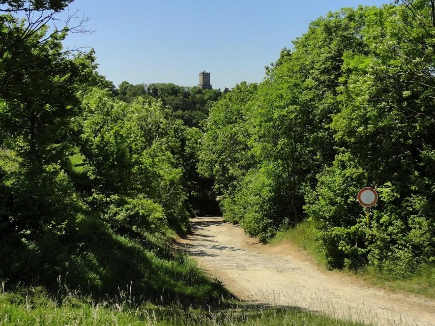 Weg nach Eckartsberga hinab, im Hintergrund die Eckartsburg