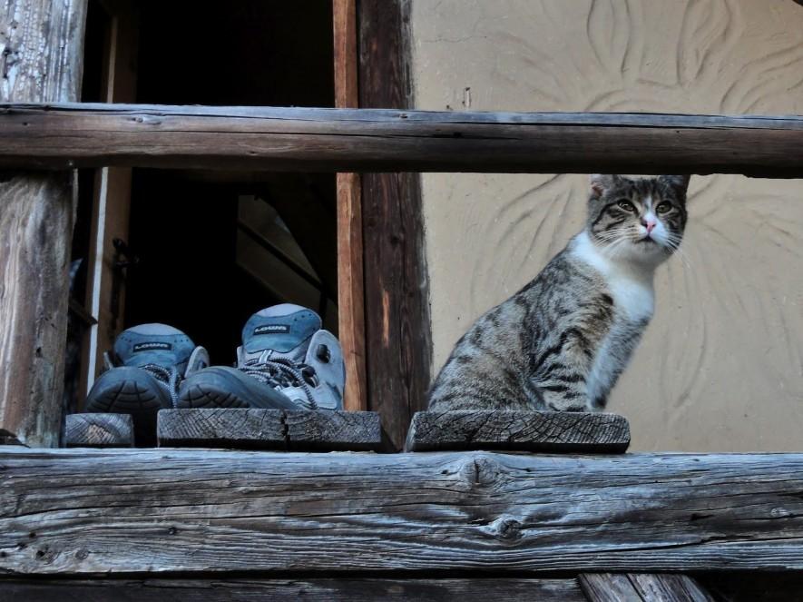 Die Katze des Hauses
