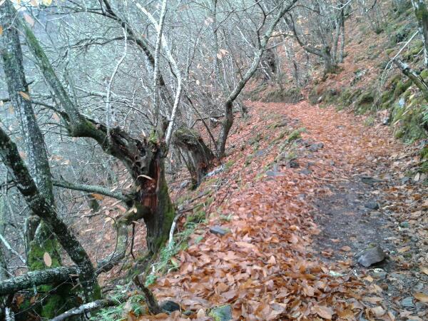 Camino_022