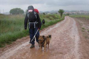 Jakobsweg mit dem Hund
